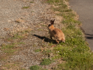 A Rabbit at Marty's Place