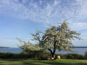 Apple Tree View with Dogs