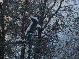 Weathervane In The Snow
